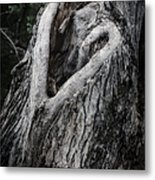 Finding Love Metal Print by Joan Carroll