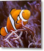 Finding Nemo Metal Print by Shannon Rogers