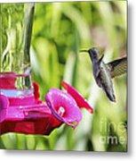 Fine Feathered Hummingbird Metal Print