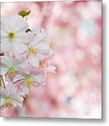 Finest Spring Time Metal Print by Hannes Cmarits