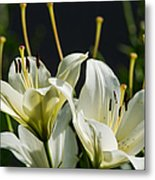 Finishing Blossoming - Featured 3 Metal Print