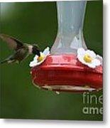 Fiona The Little Female Hummingbird Metal Print