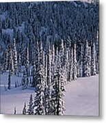 Fir Trees, Mount Rainier National Park Metal Print