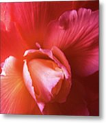Fire And Ice Floral Begonia Metal Print