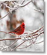 Fire And Ice Metal Print by Jinx Farmer