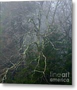 Fire Cherry In Mist Metal Print