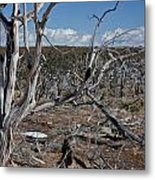 Fire Damage Metal Print