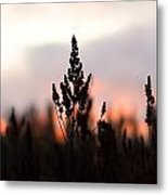 Fire Horizon Metal Print
