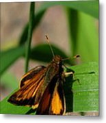 Fire Skipper Metal Print