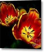 Fire Tulip Flowers Metal Print