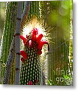 Firecracker Cacti Metal Print