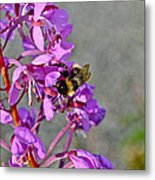 Fireweed Bee Metal Print