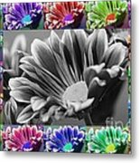 Firmenish Bicolor In All Shades Metal Print