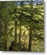 Firs And Ferns Metal Print