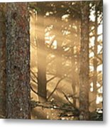 Firs On Fire Metal Print