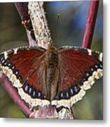 First Butterfly Of Spring Metal Print