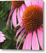 First Cone Flower Metal Print