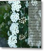 First Peter One Six To Seven White Floral  Metal Print