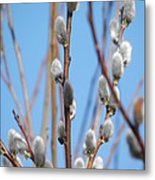 First Pussywillows Metal Print by Margaret McDermott
