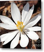 First Sign Of Spring Metal Print