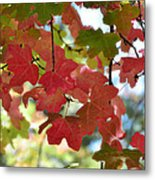 First Signs Of Fall  Metal Print