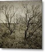 First Snow Metal Print by Amy Weiss