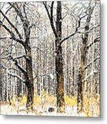 First Snow. Tree Brothers Metal Print