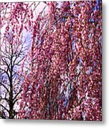 First To Flower Metal Print