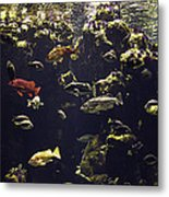 Fish Aquarium Metal Print