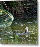 Fish Caught On A Line In Water Metal Print