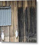 Fish Drying Outside Rustic Fisherman House Metal Print
