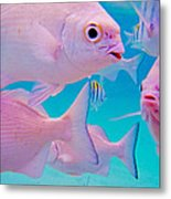 Fish Frenzy Metal Print