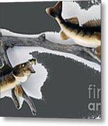 Fish Mount Set 06 B Metal Print