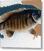 Fish Mount Set 10 Cc Metal Print