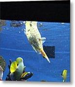 Fish - National Aquarium In Baltimore Md - 1212117 Metal Print