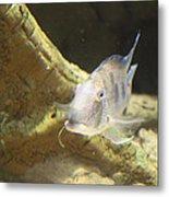 Fish - National Aquarium In Baltimore Md - 121248 Metal Print by DC Photographer