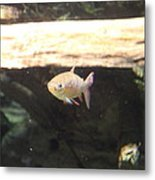 Fish - National Aquarium In Baltimore Md - 121249 Metal Print