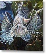 Fish - National Aquarium In Baltimore Md - 121266 Metal Print by DC Photographer