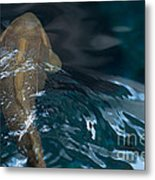 Fish Of The St. Lawrence Metal Print
