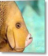 Fish Profile Metal Print