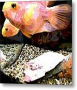 Fish Metal Print by Sarah E Kohara