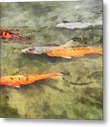 Fish - School Of Koi Metal Print by Susan Savad