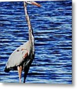 Fishing Metal Print by Will Boutin Photos