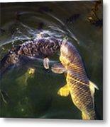 Fishy Kisses Metal Print