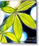 Five Leaves. Metal Print