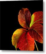Five Leaves Metal Print