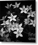 Five Petals Metal Print