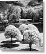 Five Trees Metal Print