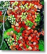 Flamboyant In Bloom Metal Print by Karin  Dawn Kelshall- Best