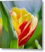 Flame Leaf Tulip Metal Print